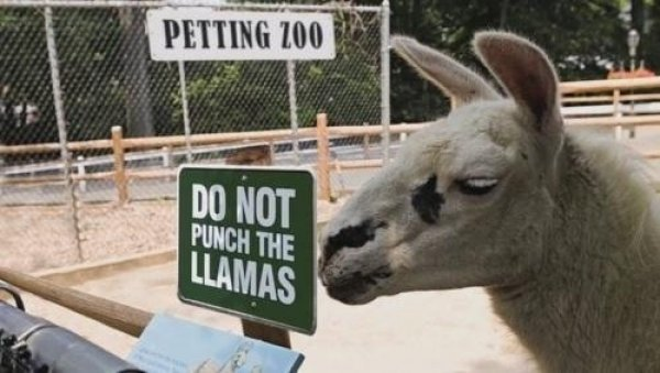 2782fd0527f1999d11ecf6e7c369ded1-please-dont-punch-the-llamas