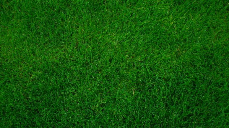green_grass_by_emerald_stock-d3kt4n6